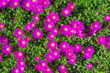 Tiny Purple Flowers Backdrop