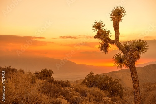 California Desert Scenery - 71754729