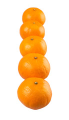 A row of Mandarin orange fruit over white background