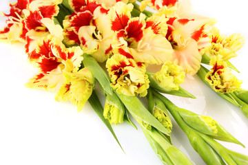 Bright yellow and red gladiolus isolated \ horizontal