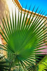 Eine Palme im exotischen Garten
