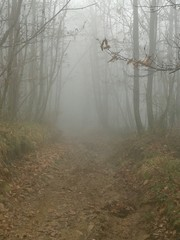 Sentiero tra la nebbia