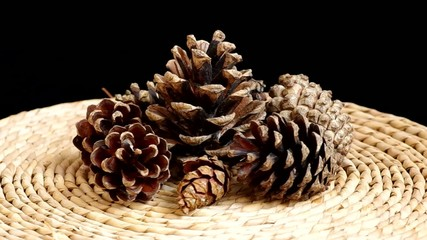 Pine cones rotate on black background