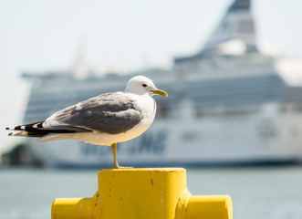 Seagull on Helsinki Harbour