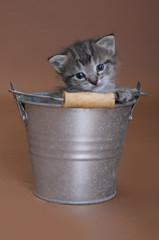 Tabby kitten in a bucket