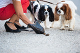 Ramasser  déjection canine
