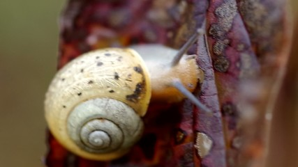 Snail on leaf in autumn in the wind
