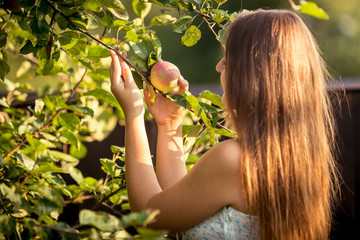 young woman picking apple from tree branch