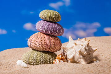 Sea Hedgehog shells on  sand and blue sky Background