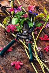 garden shears and cut branches, flowers and leaves
