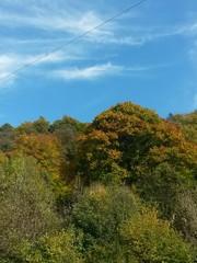 Cielo e piante in autunno