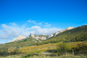 Vineyards in autumn in Crimea