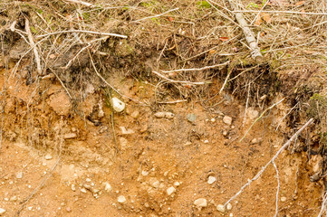 Soil in forest