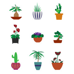 Set of houseplants in pots