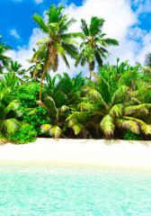 Plants Coconut Park