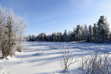 Scenic winter forest landscape in the north of Russia