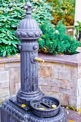 water faucet in the autumn garden