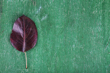 Dark leaf on green wooden background