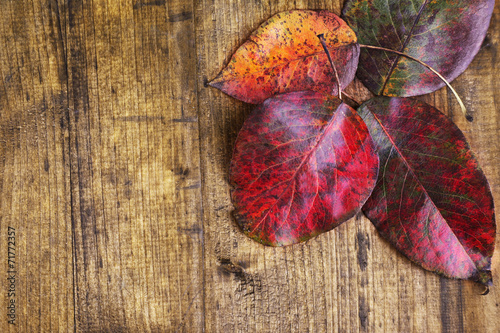 canvas print picture Leaves on brown wooden background