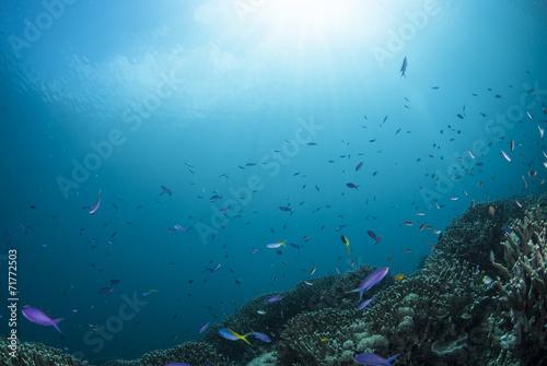 Papiers peints Recifs coralliens 海底の景色