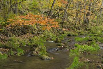 Autumn Creek In Woods