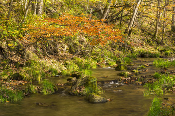 Autumn Creek In Woods