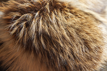Fur product from a fox