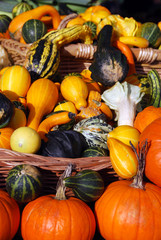 Pumpkins, edible and decorative