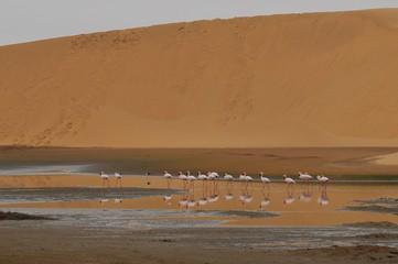 Flamingos im Kuiseb-Delta bei Walvisbay