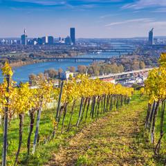 Viniculture Vienna, Austria