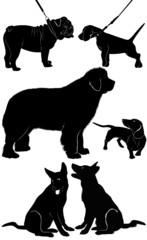 dog Shepherd Dog Dachshund bulldog