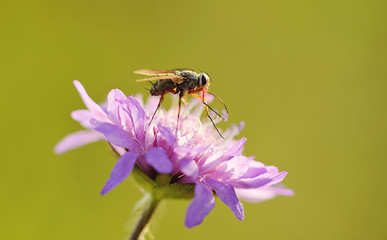 Closeup photo of a fly on flower