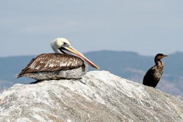 Algarrobo marine wildlife, pacific ocean landscape