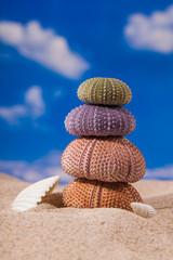 Sea Hedgehog shells on  sand and blue sky