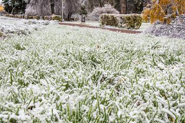 Снег на траве