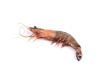Fresh tiger shrimp