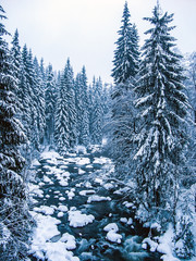Snowy creek in the woods