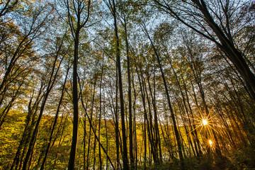 Forêt de Chantilly FRANCE