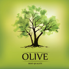 watercolor olive tree. Olive oil.For labels, pack