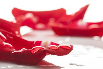 Wet red rose petals