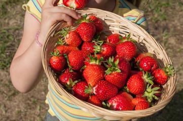 Erdbeerernte - Kind hält Korb mit Erdbeeren