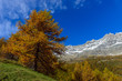 Autunno in montagna