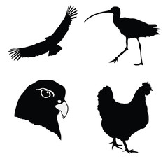 Illustration in style of black silhouette of hen,gyrfalcon,condo