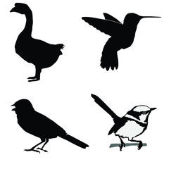 black silhouette of wren,hummingbird,goose,sparrow