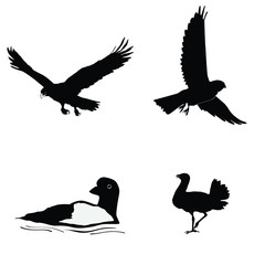 black silhouette of bustard,loon,kestrel,golden eagle