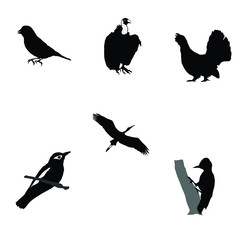 black silhouette of woodpecker,wood grouse,greenfinch,stork,orio