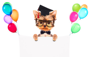 graduated dog with banner