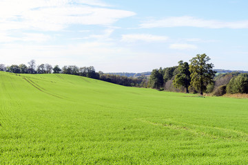 Field of green grass and trees.