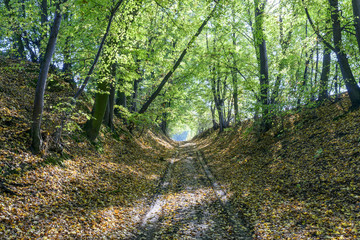 Early autumn forest road