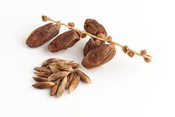 Seeds and Date Palm (Phoenix dactylifera).